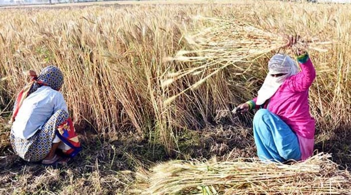 Farm bills have potential to be a notable step forward for Agri reforms: IMF