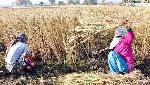 Full text of open letter to WTO by 20 IFS officers backing India's farm laws