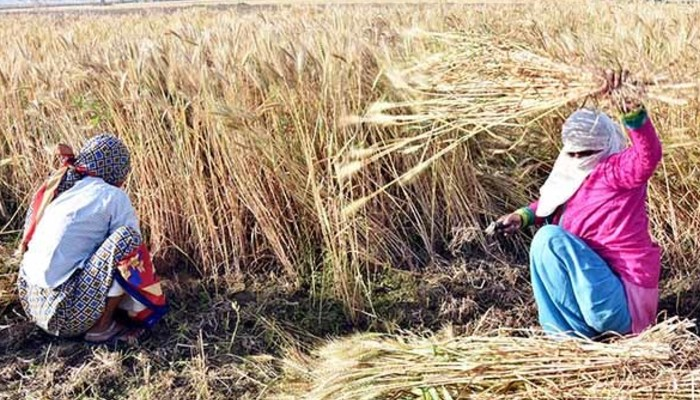 NRIs of San Francisco Bay Area come out in support of India's Farm Laws