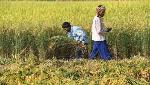 Cabinet approves pact between India, Fiji for co-operation in agriculture sector