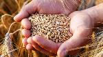 India is committed to procure wheat at MSP: Food Secretary