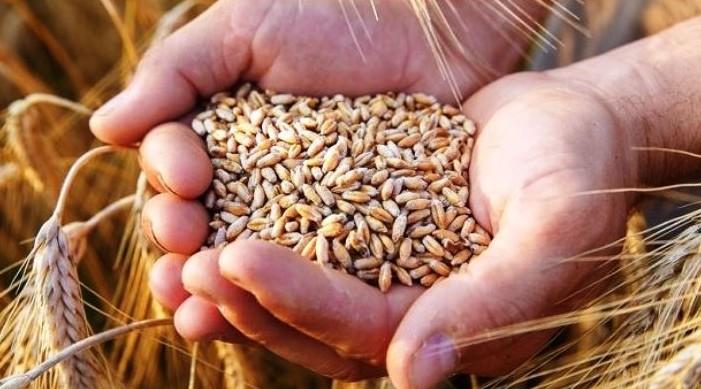 भारत एमएसपि मा गहुँ खरीद गर्न प्रतिबद्ध छ: खाद्य सचिव