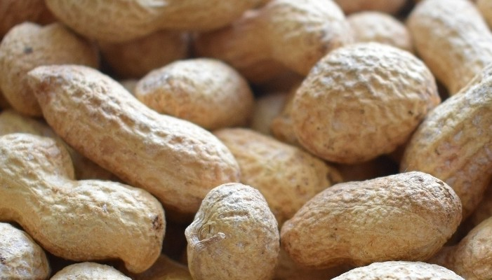 Export of groundnuts from West Bengal to Nepal opens up new opportunities for eastern region