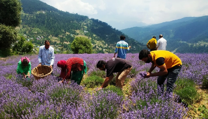 Integrated Aroma Dairy Entrepreneurship proposed to increase income of Jammu & Kashmir farmers