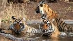 Zoological Survey of India, UK's Natural History Museum sign MoU on faunal diversity research