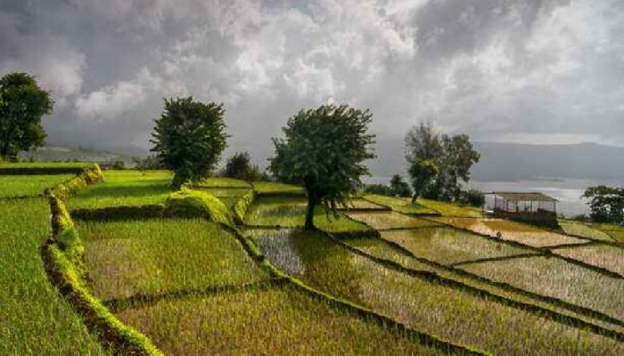 India exporting strictly non-GM rice to world: Ministry of Commerce & Industry